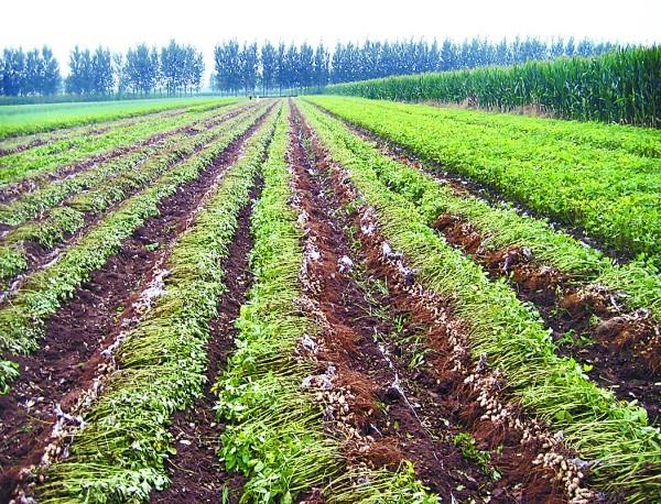 重磅!巴彦淖尔市加强农牧业投入品追溯制度落实
